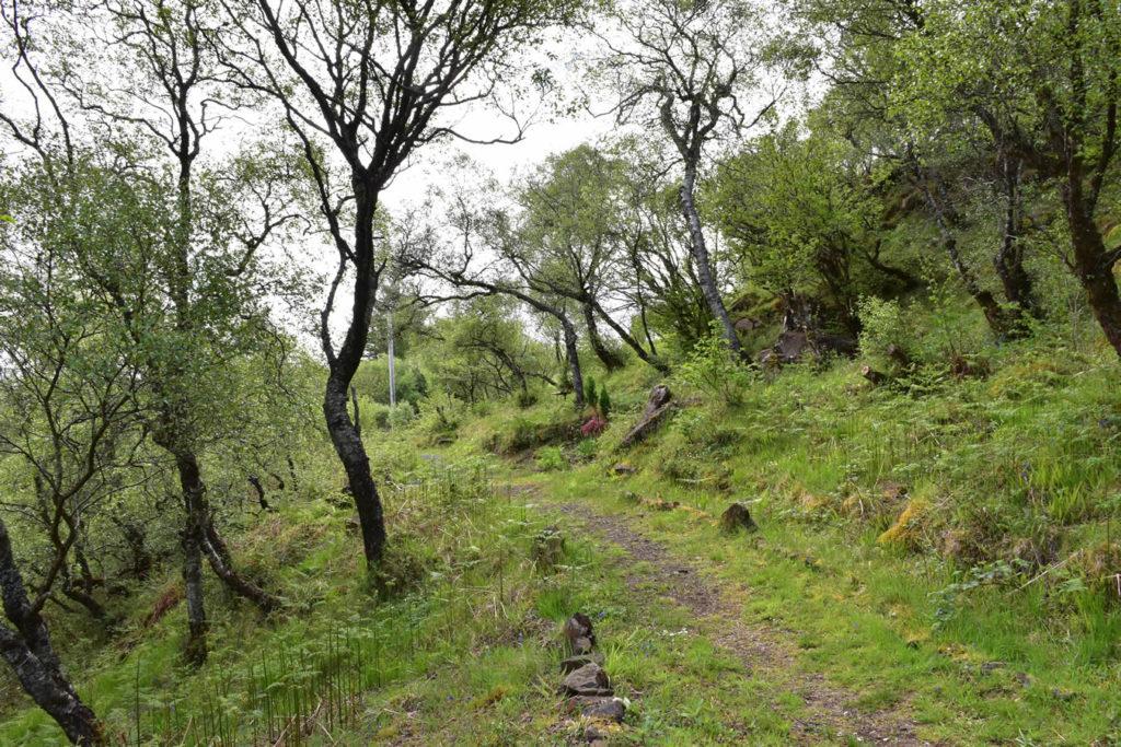 Killoran House Garden Pathway