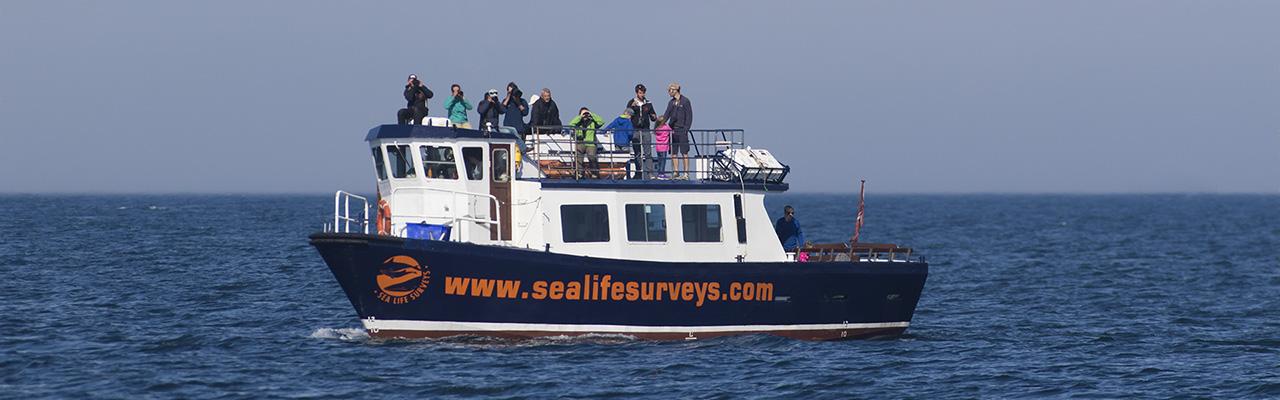Sea Life Surveys Header Image