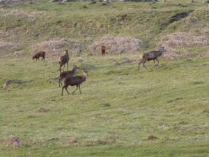 Killoran House Deer 01