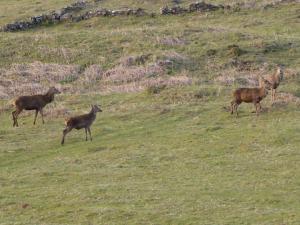 Killoran House Deer 03