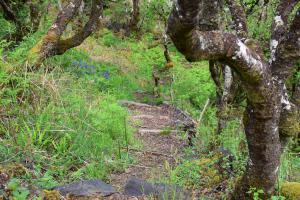 Killoran House Garden Steps
