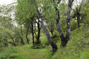 Killoran House Garden Trees