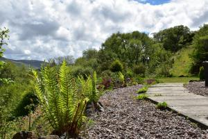 Killoran House Garden Fern And Path