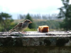 Birds on Treshnish (2009)