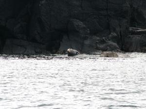 Seals (2009)